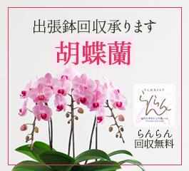 胡蝶蘭鉢回収サービス