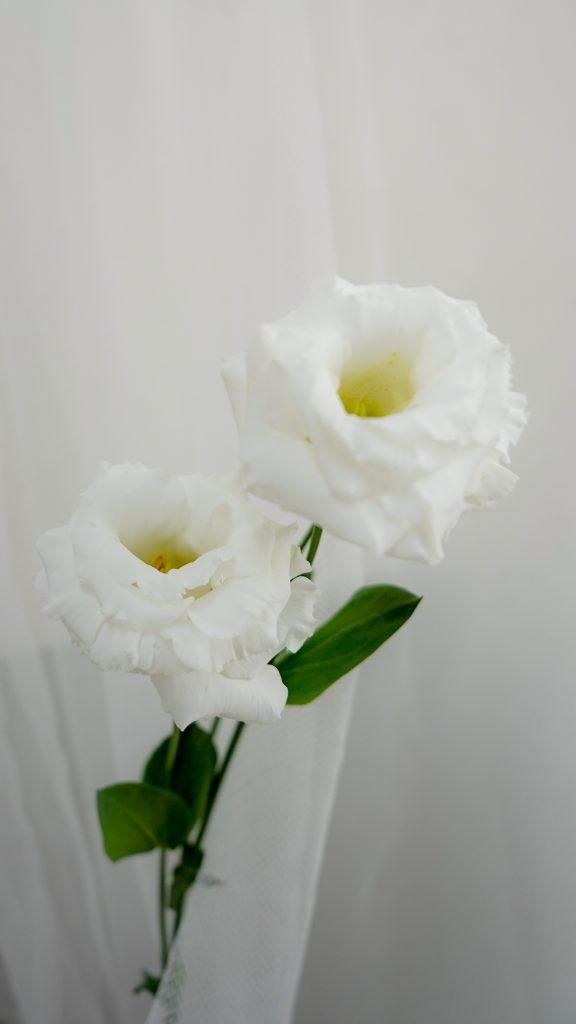 レイナホワイト