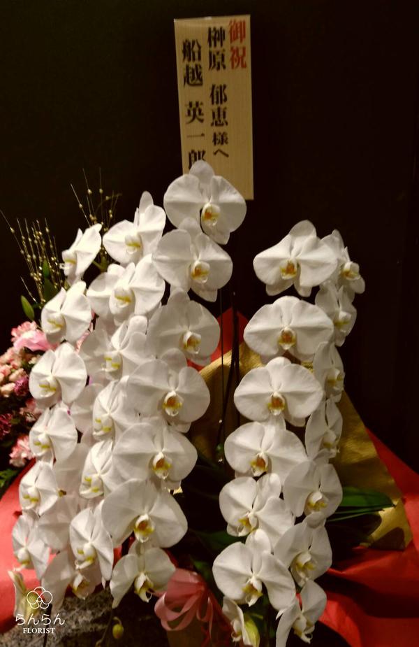ミュージカル『舞妓はレディ』出演者様へ楽屋花を納品しました[公演祝い花]