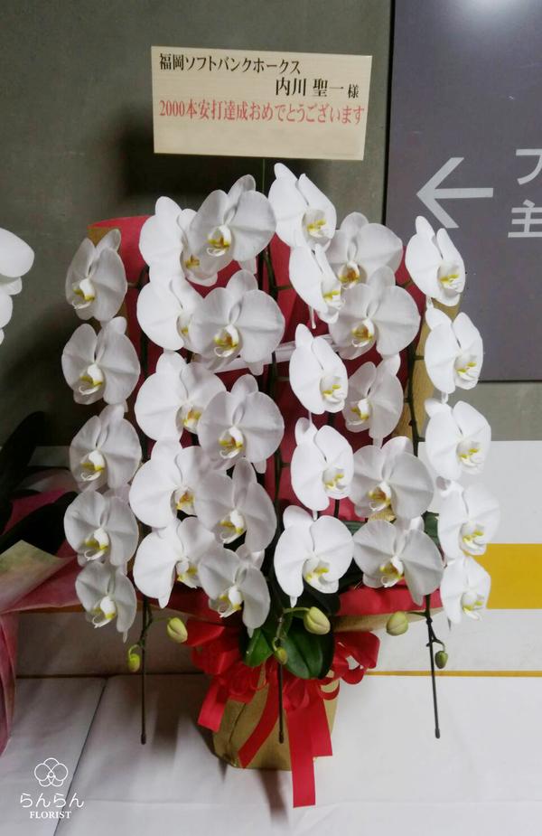 福岡ソフトバンクホークス 内川聖一様へ大輪胡蝶蘭を納品しました