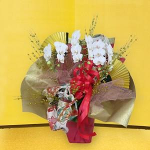 【福岡限定】円舞【ENBU】 プレミアムミディ胡蝶蘭 3本立 和モダン風呂敷アレンジ