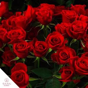 [追加注文用]プレミアムローズ 大輪薔薇 赤 1本