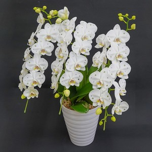 スノーフェアリー【AYA】 誕生石カラースワロフスキーミディ胡蝶蘭 3本立 白